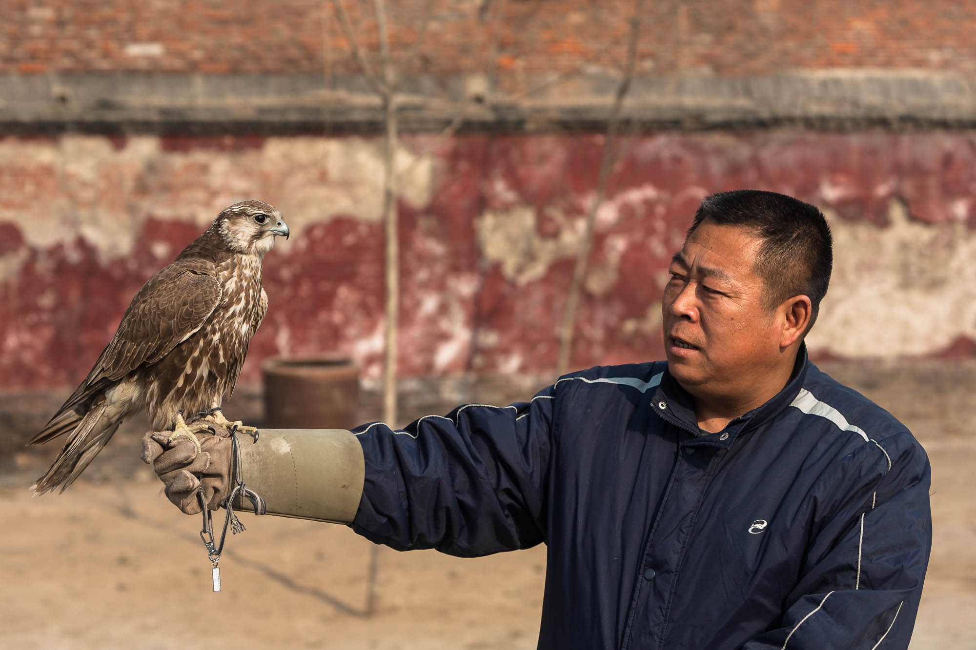 gentleman with falcon