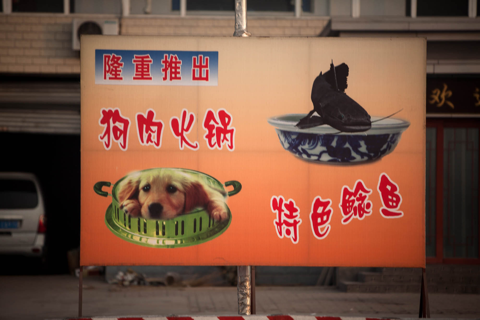 dog meat hot pot