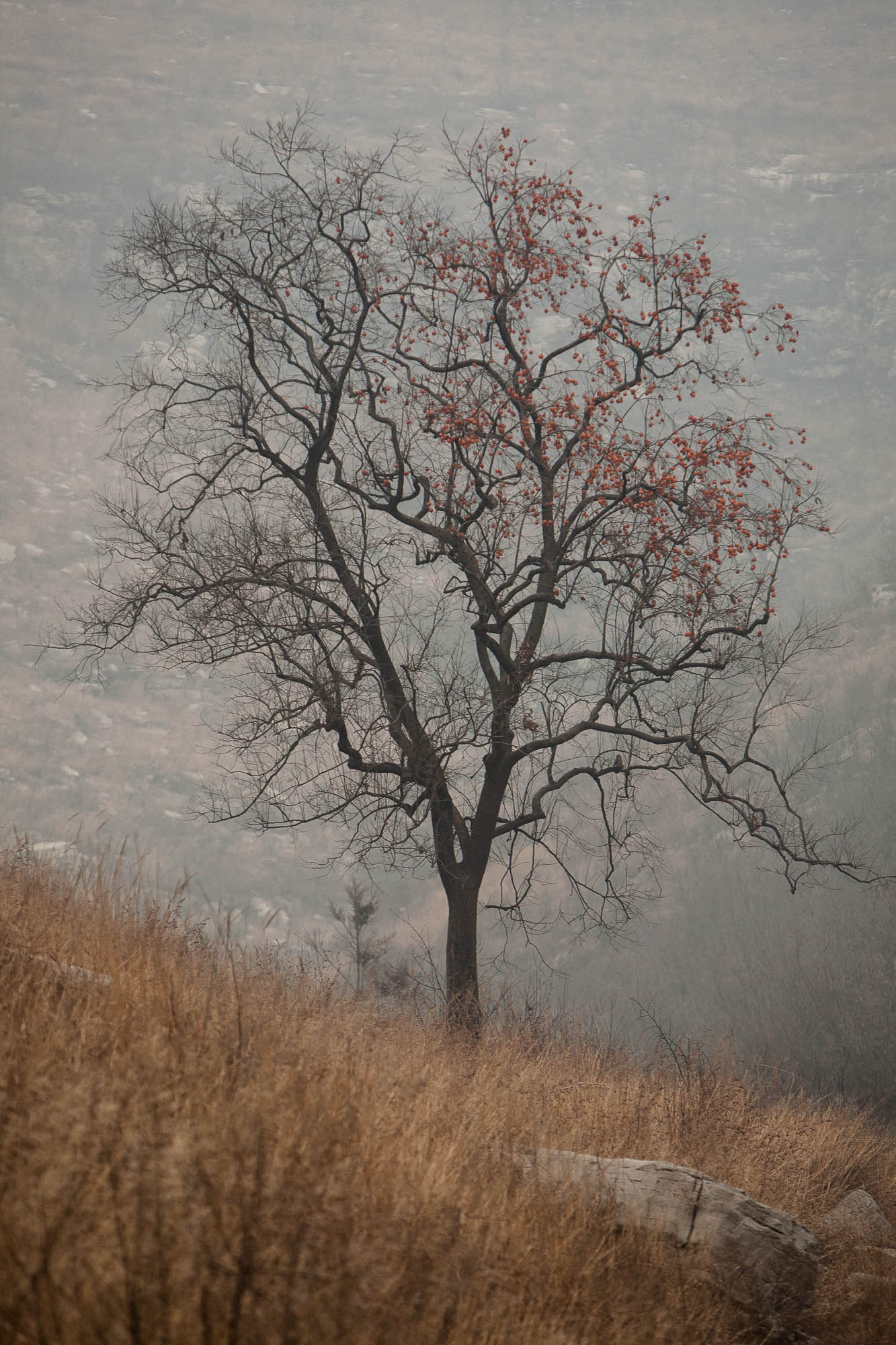 tree in the mountains