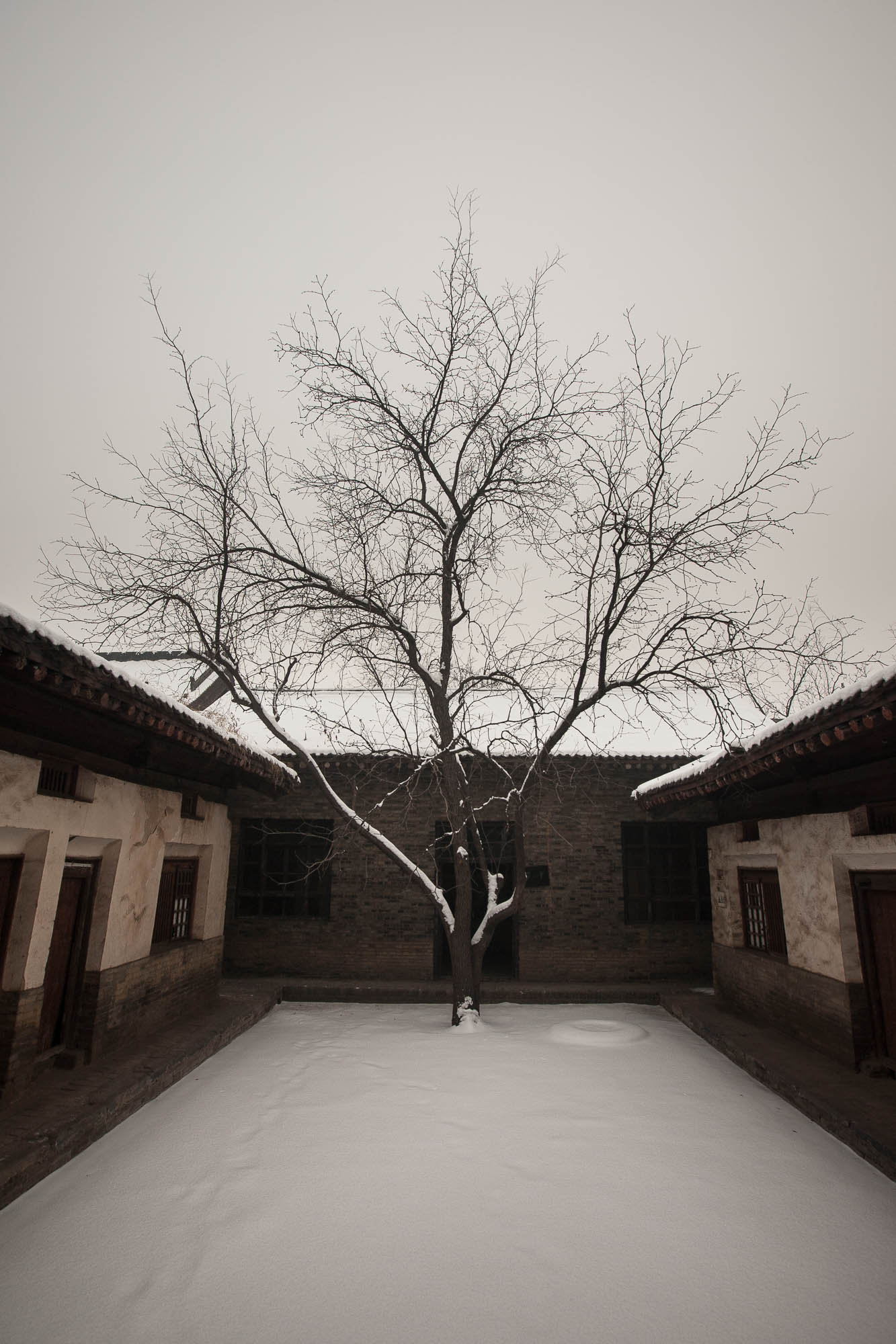 tree in Dingcun