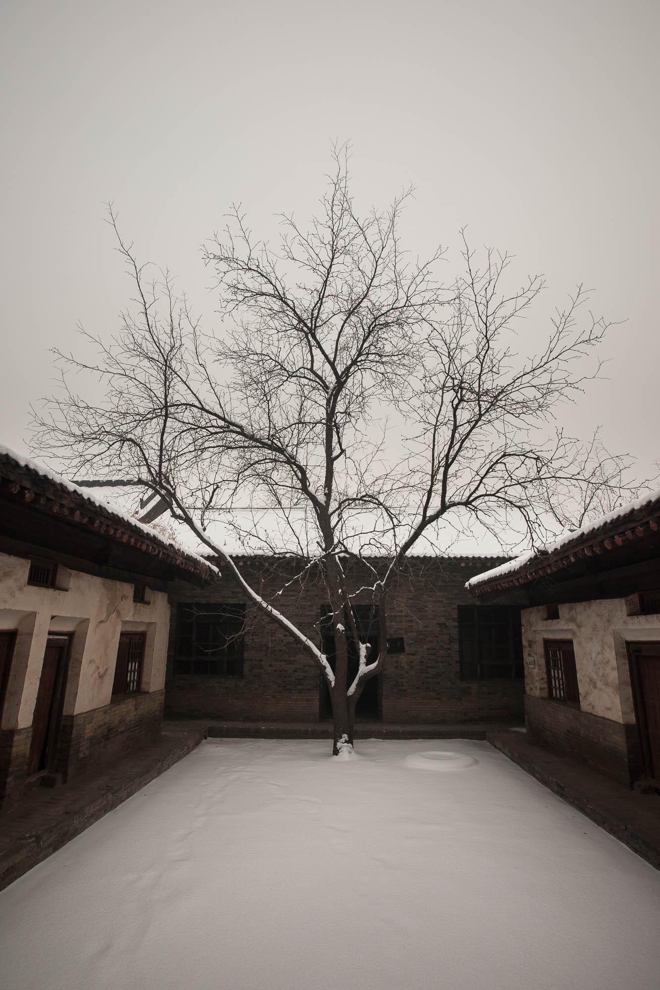 tree in Dingcun