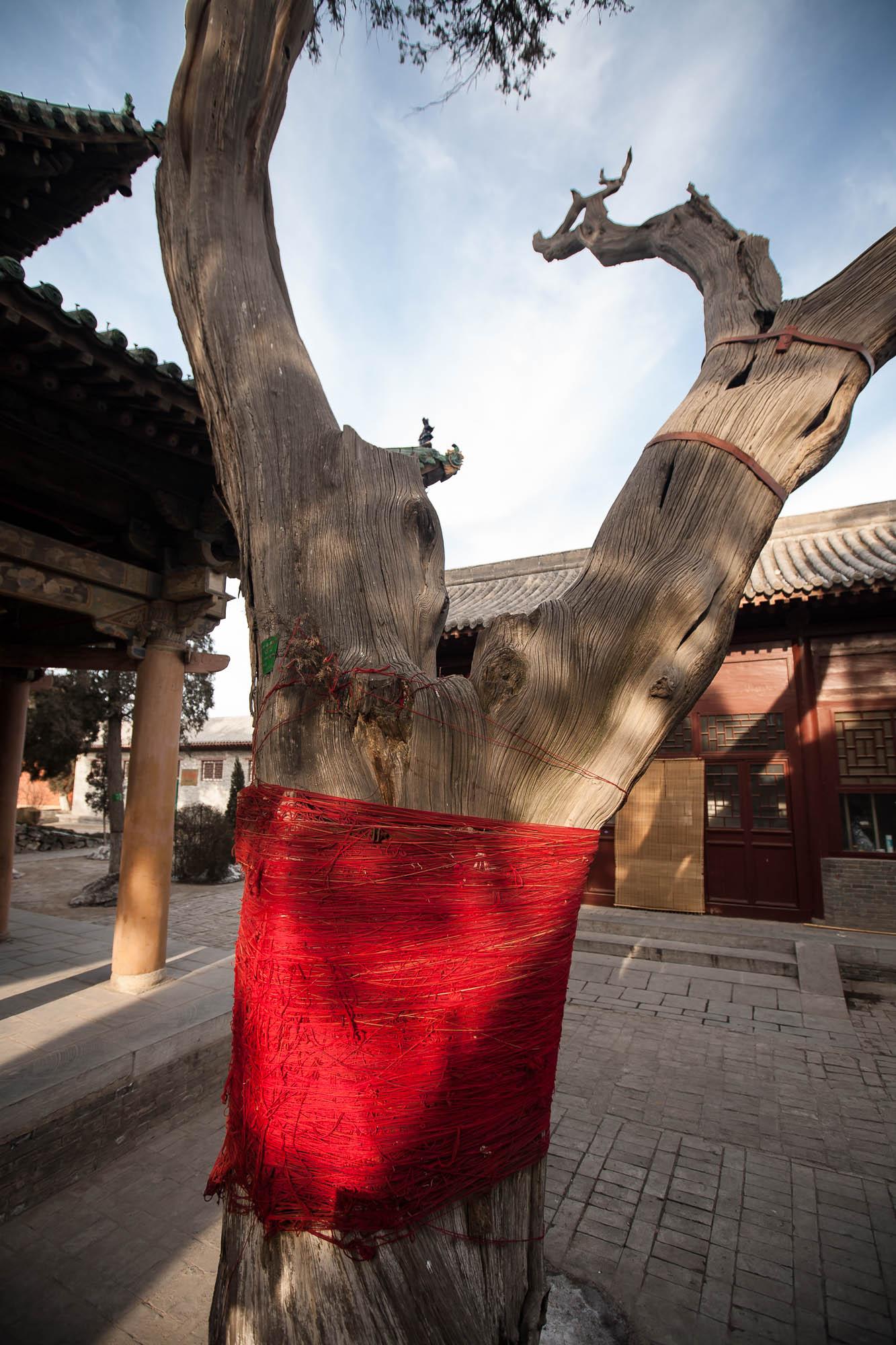 tree in Guan Di Temple