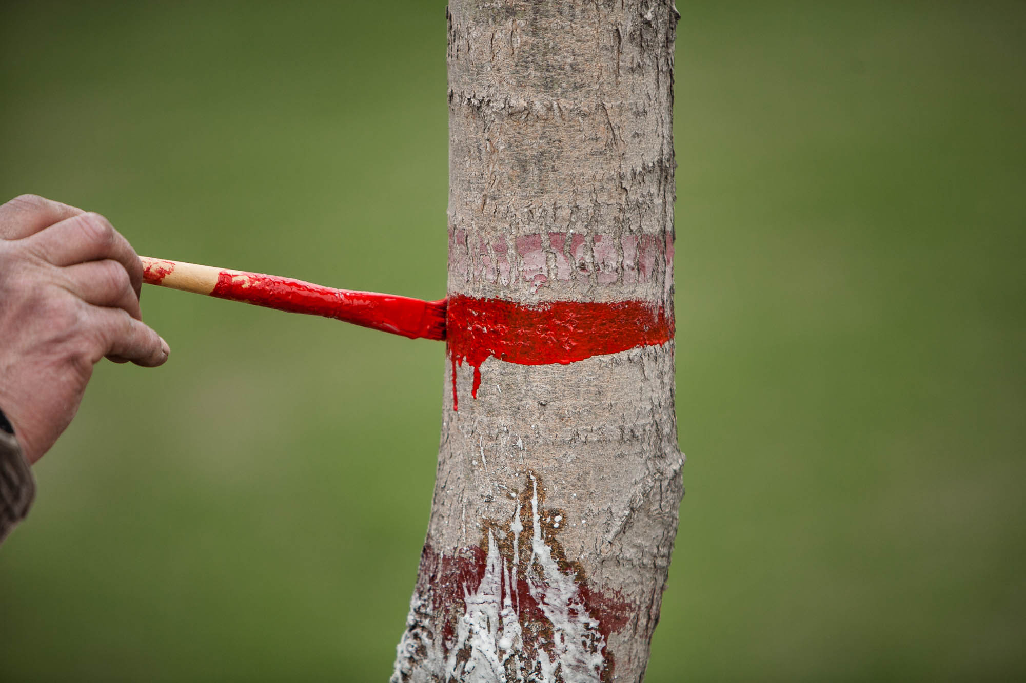 red stuff for trees