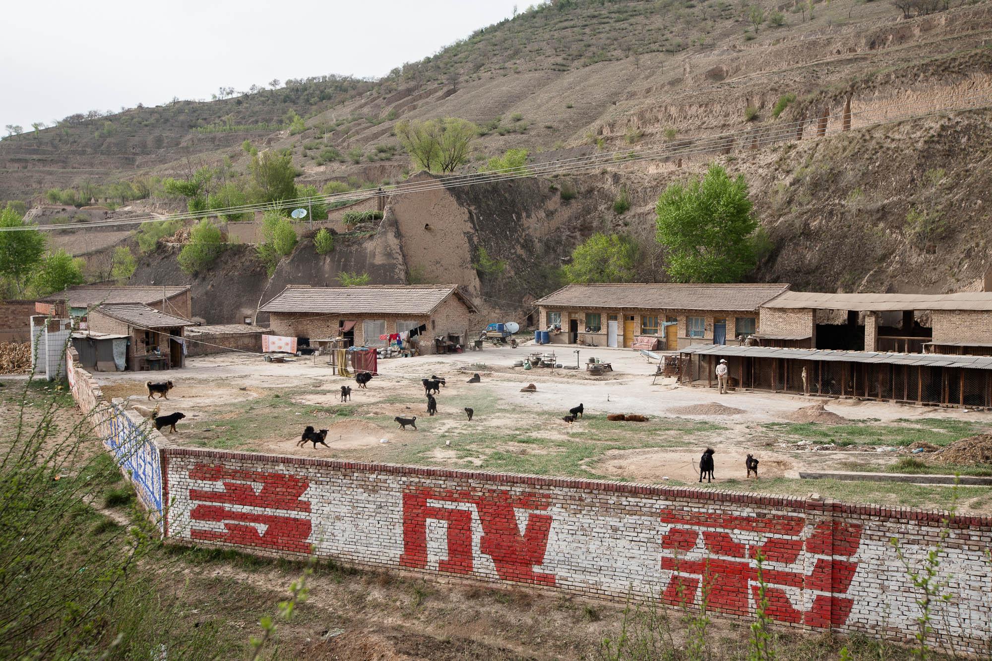 dog farm