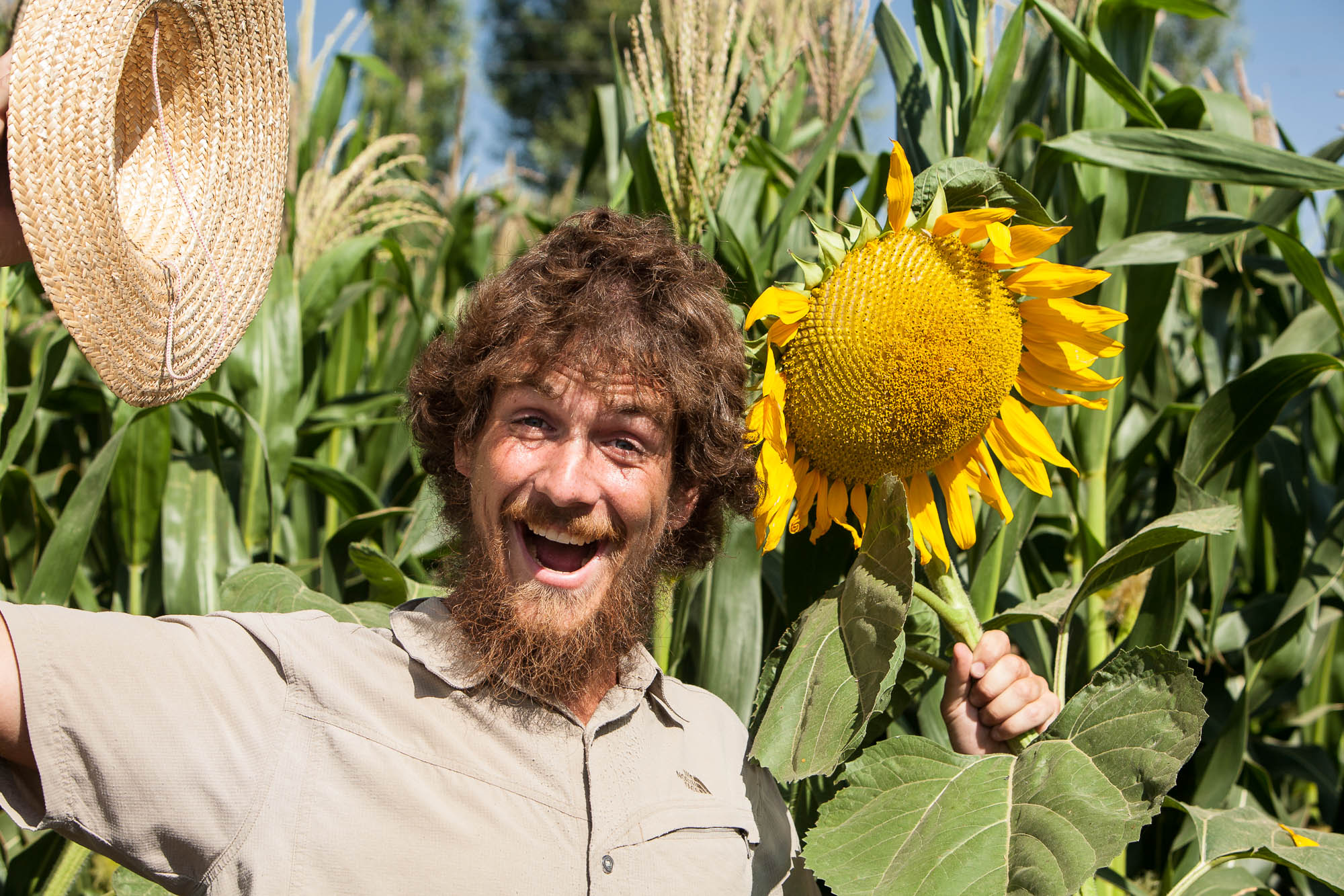 Sunflower Chris