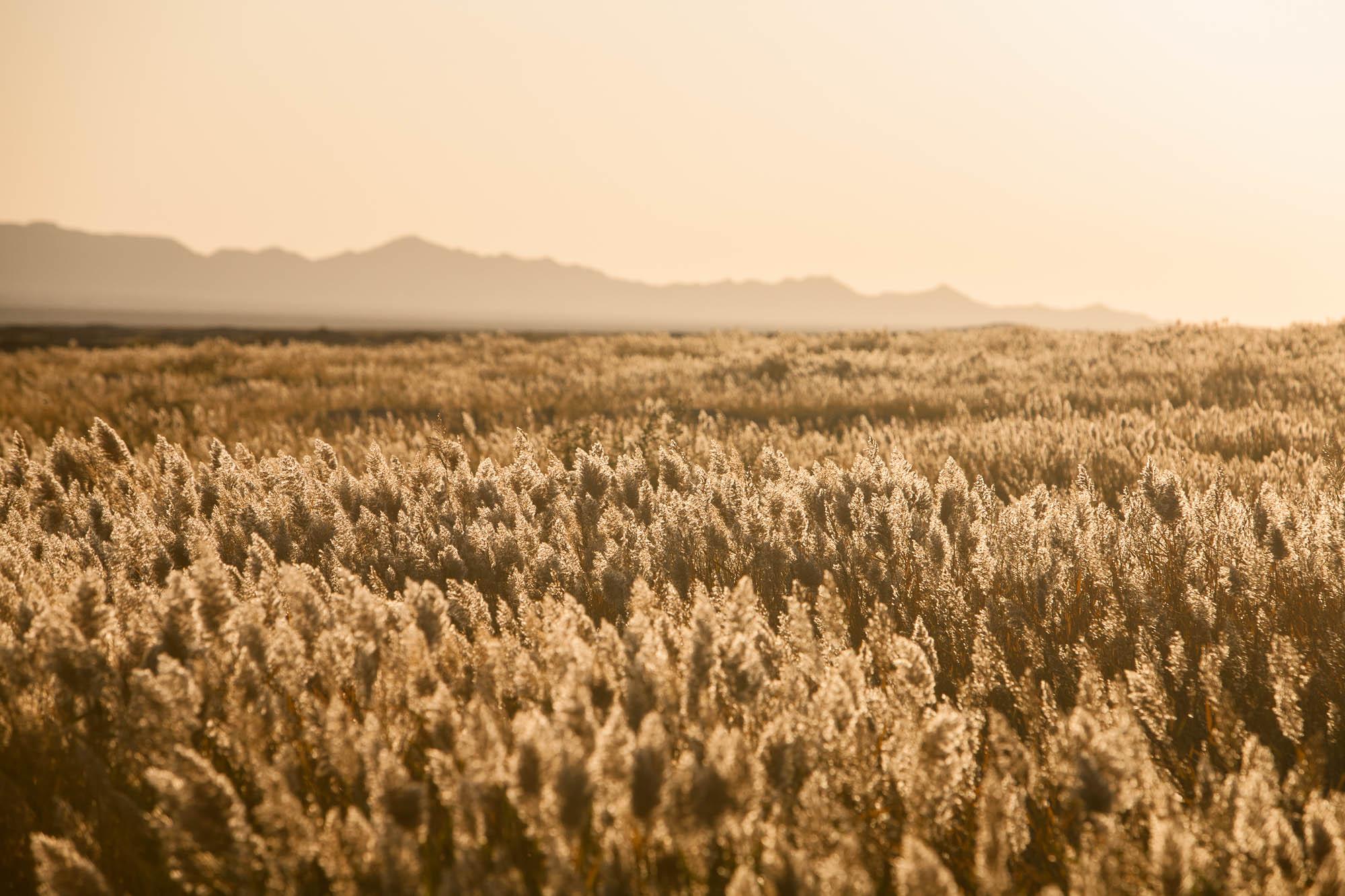 fertile land