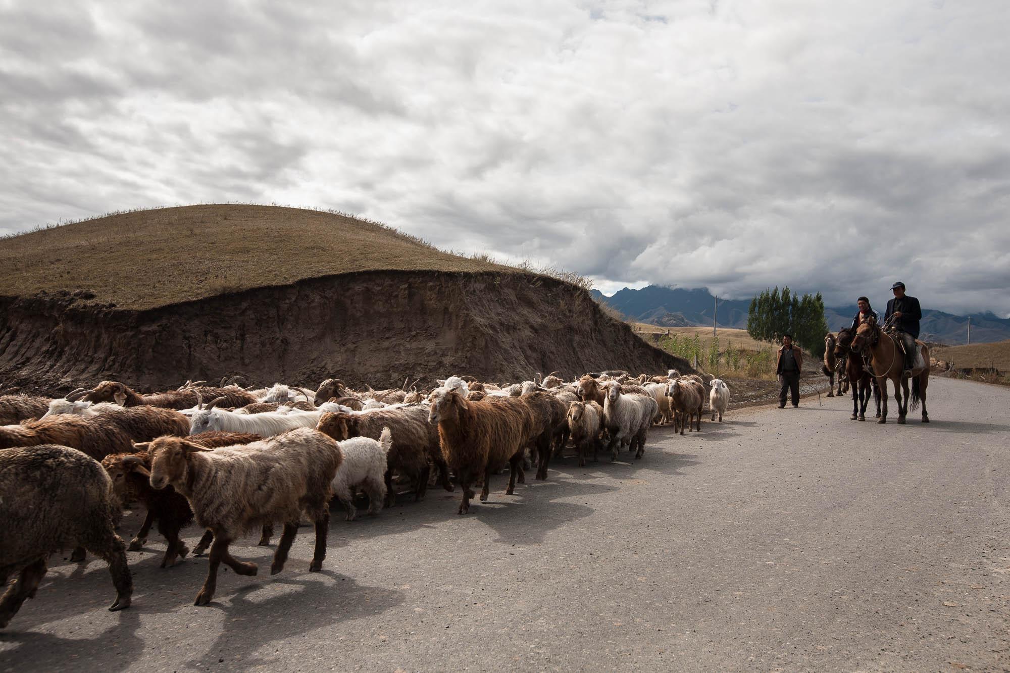 sheep herders