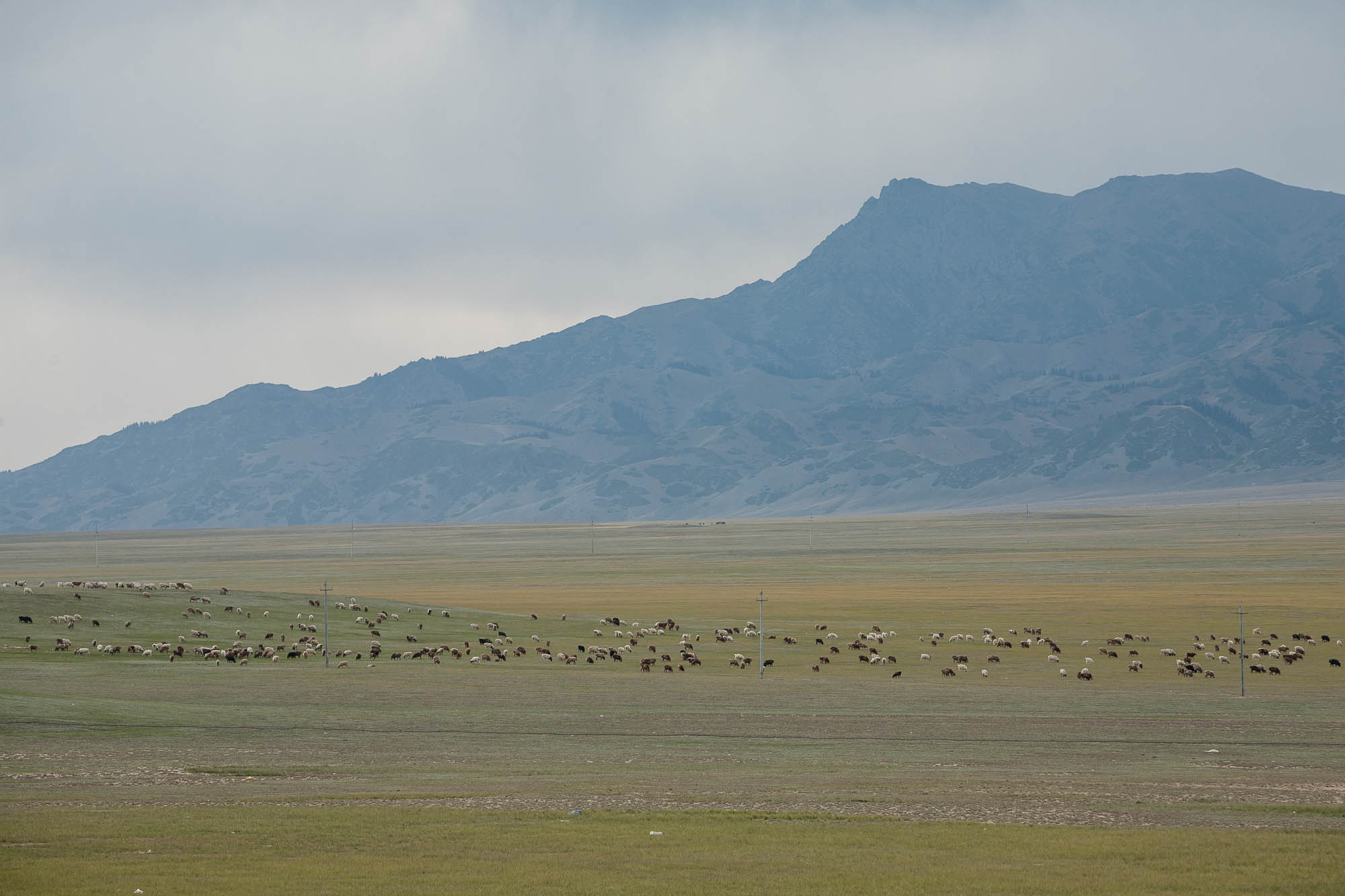 herds