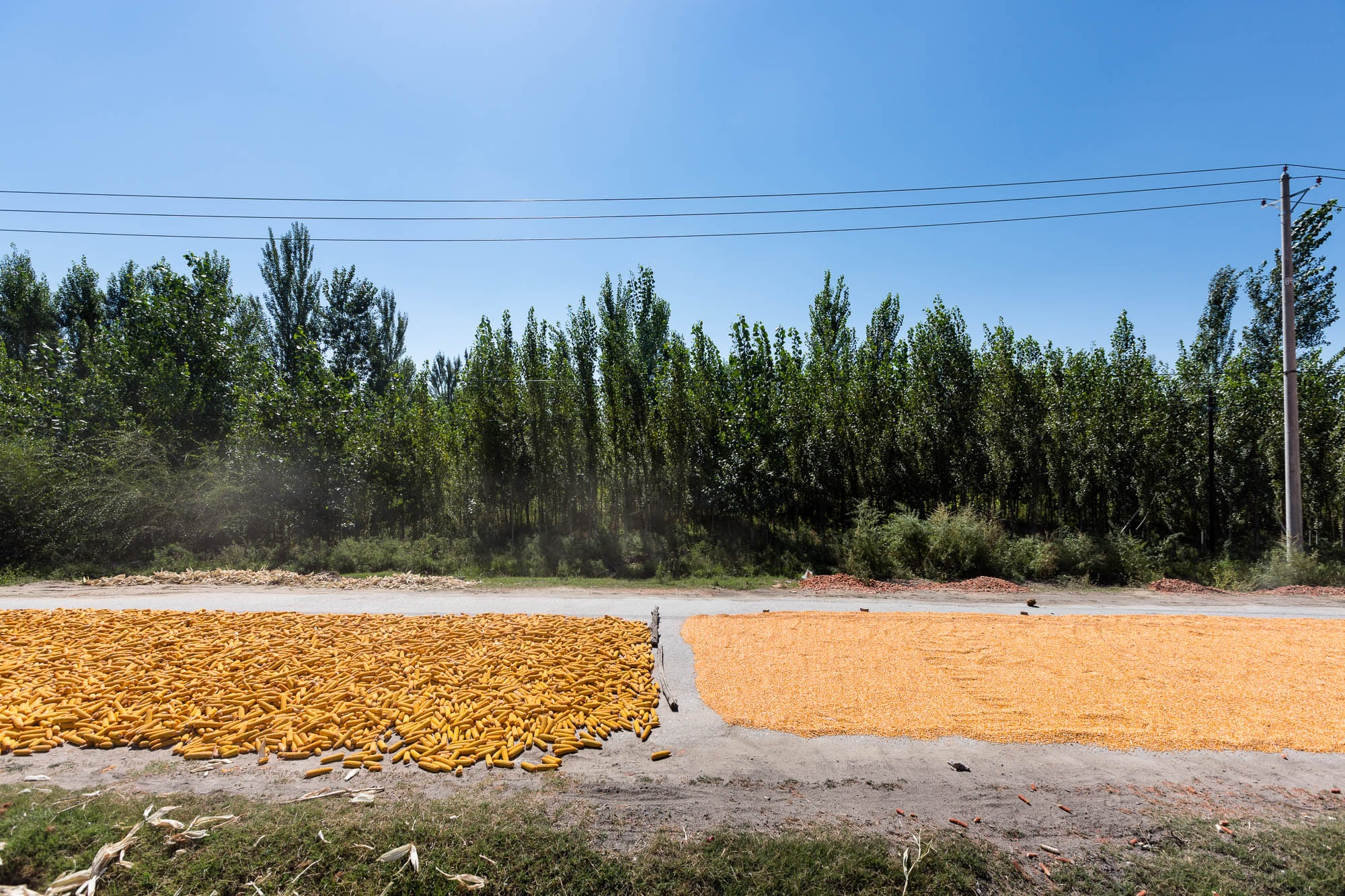 corn on the road