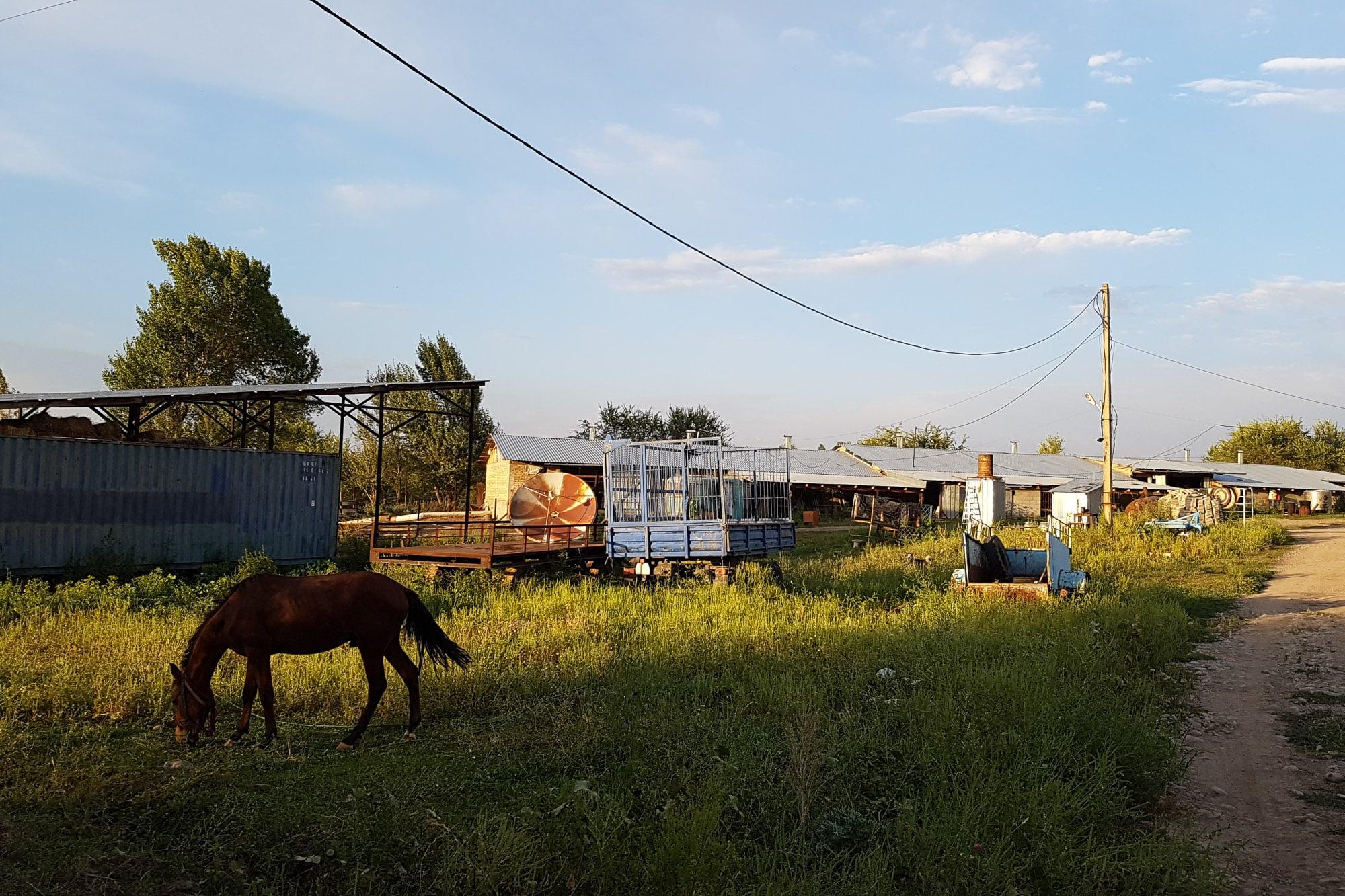 farm in Issyk