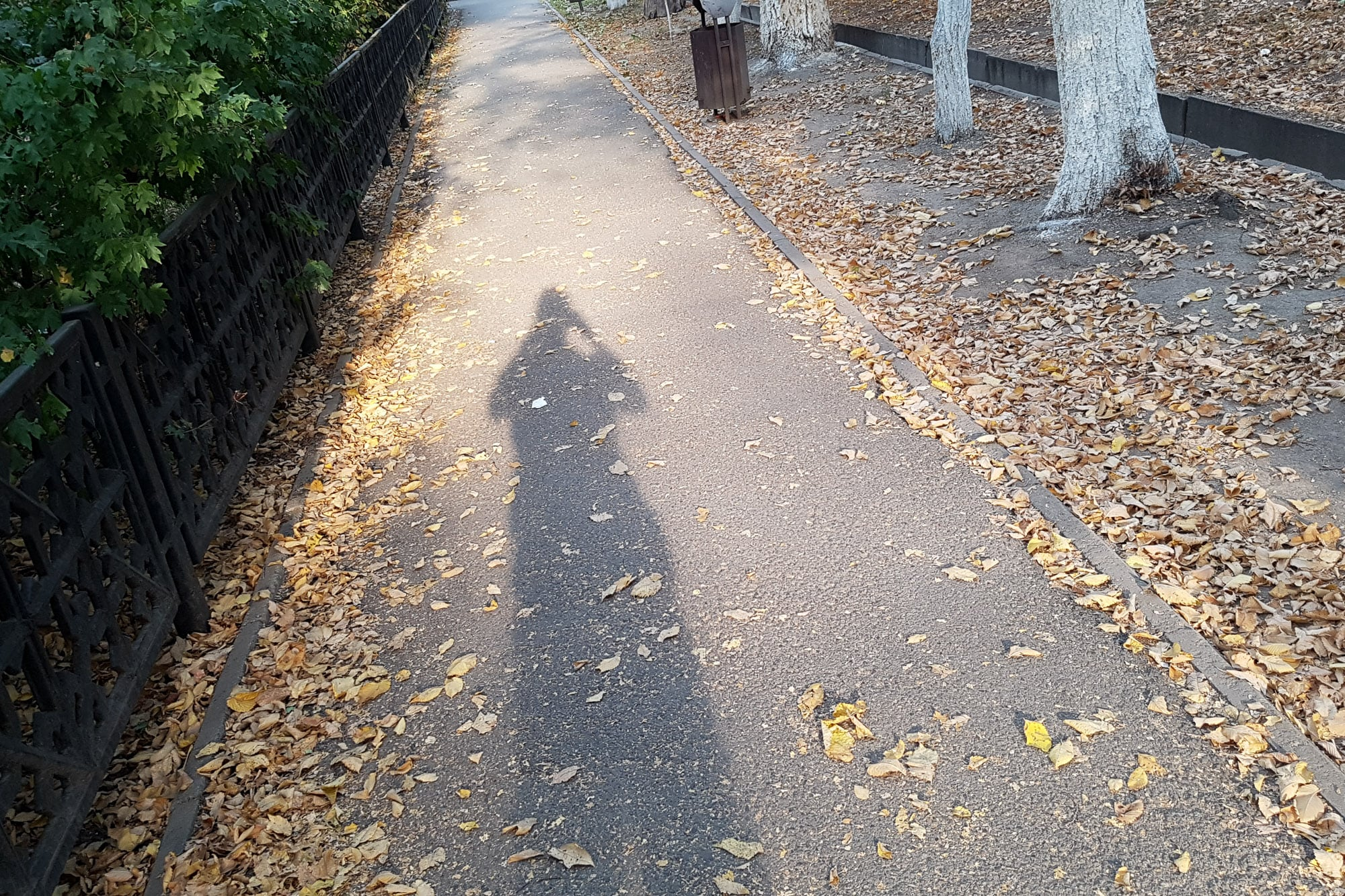 shadow and leaves