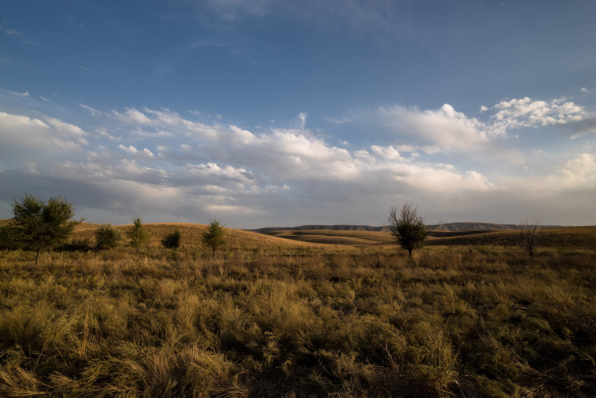 more steppe
