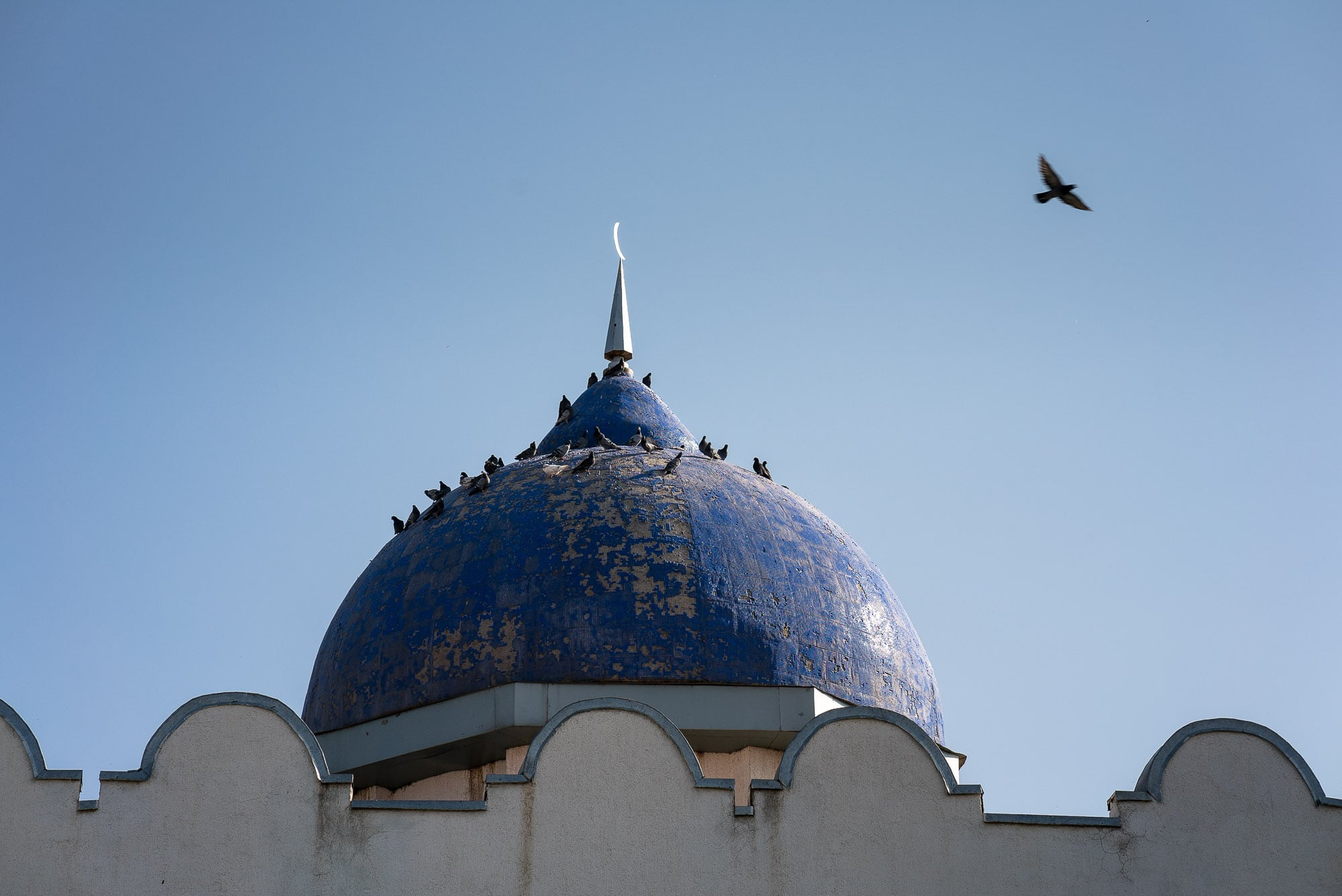 birds on mosque