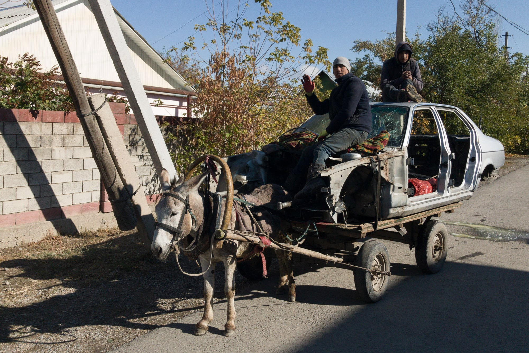 donkey vehicle