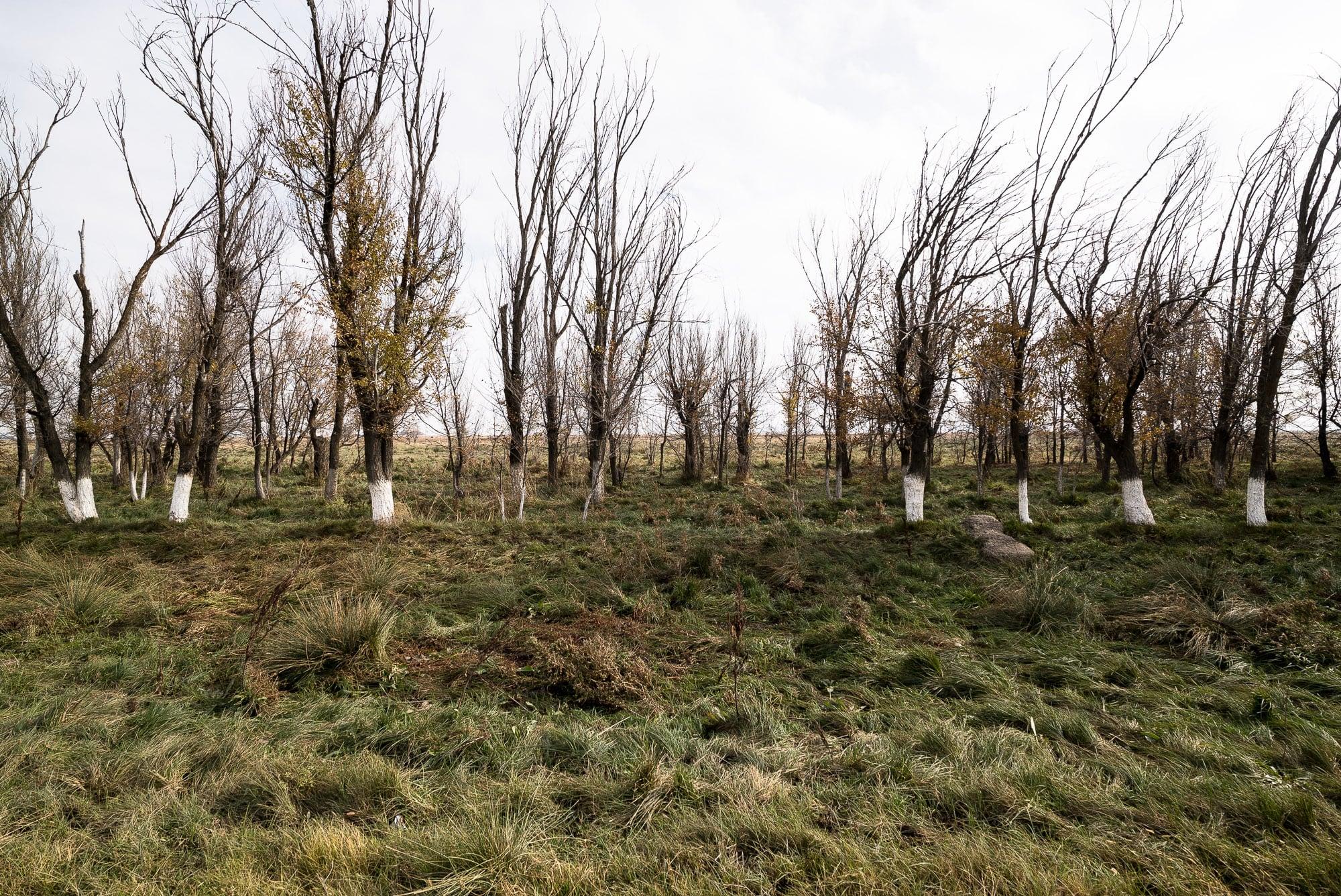 outside of Taraz