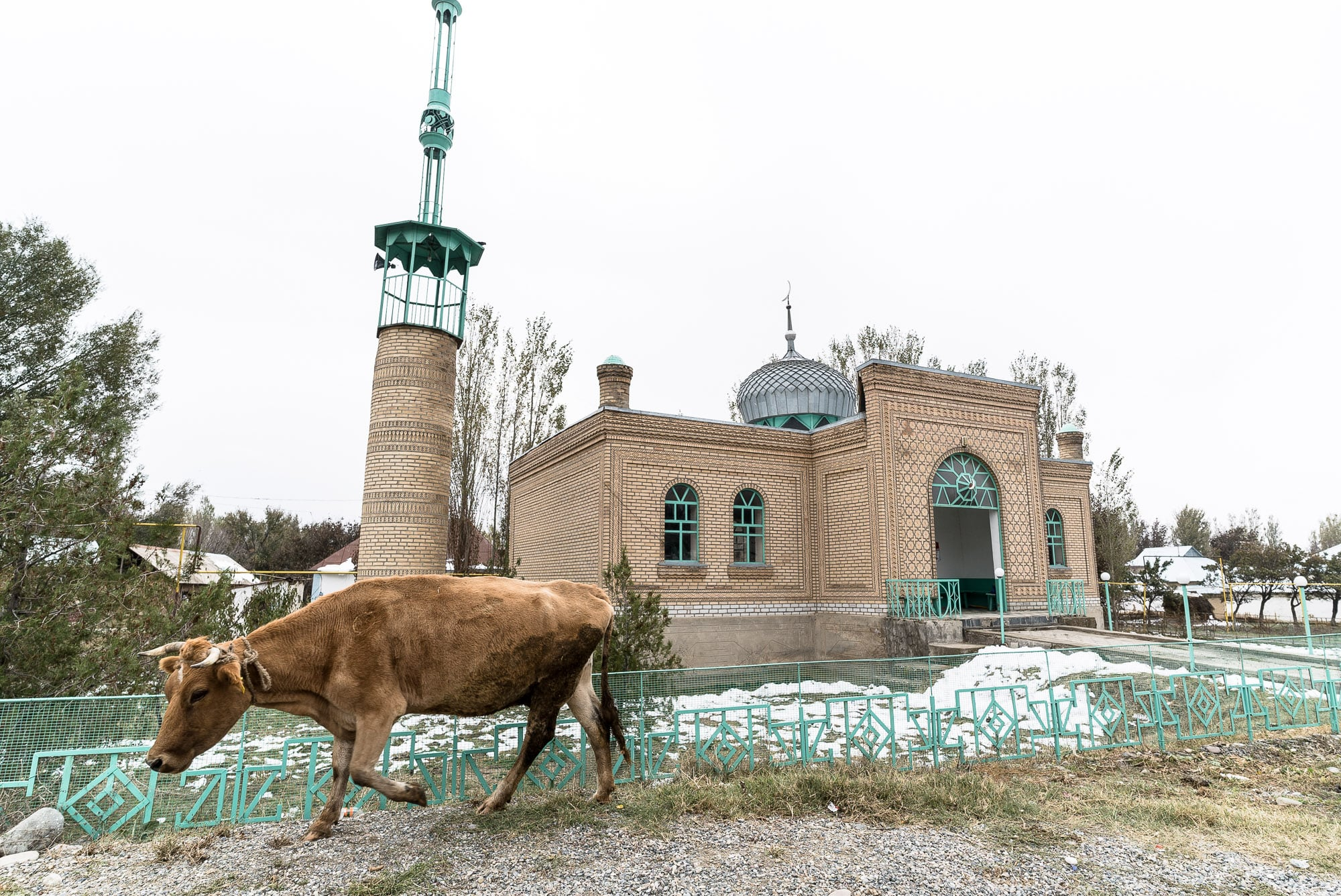 mosque with cow