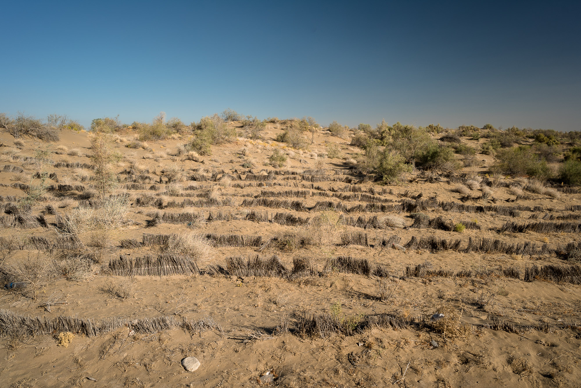 attempts to stop desertification