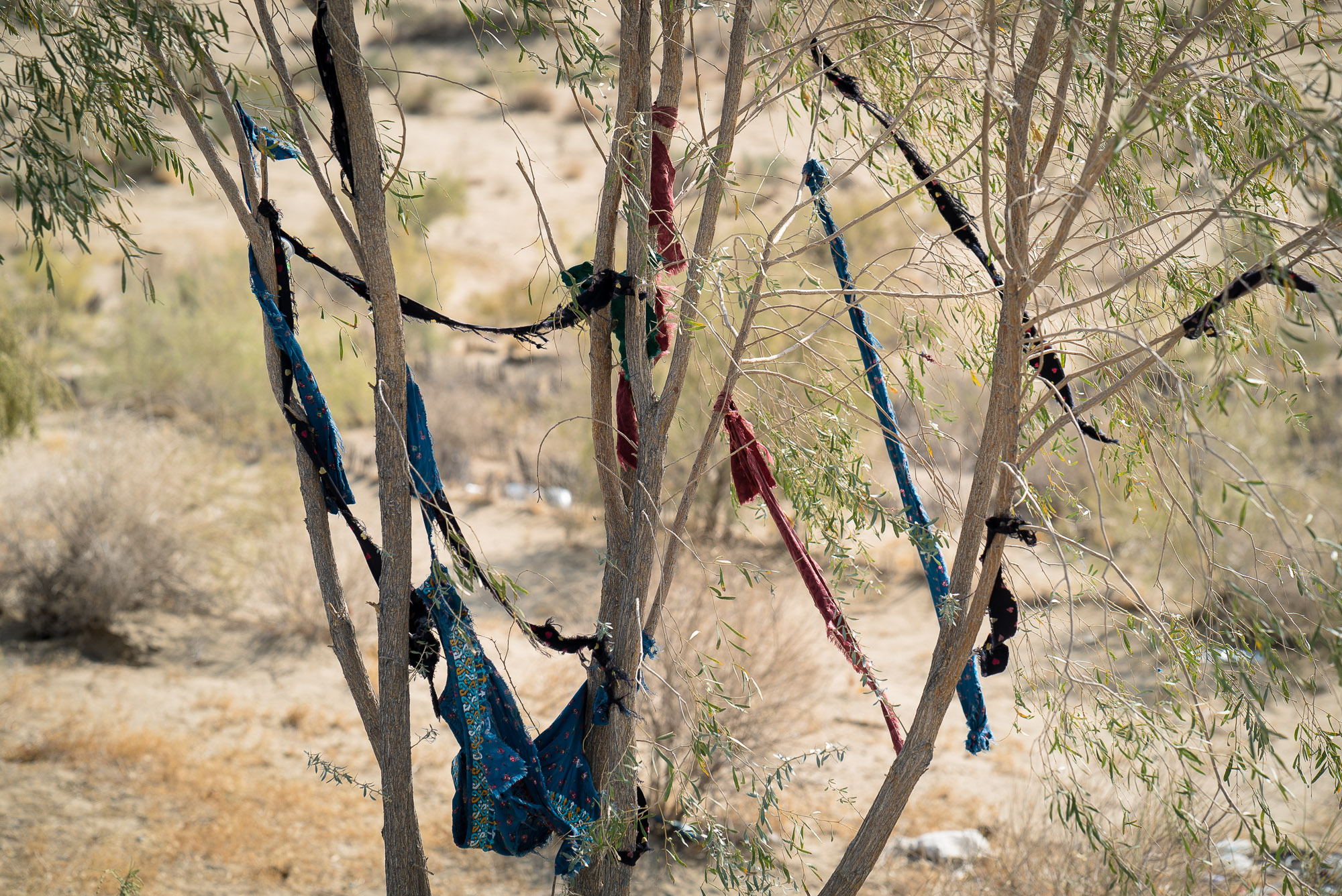pieces of cloth hung in a tree