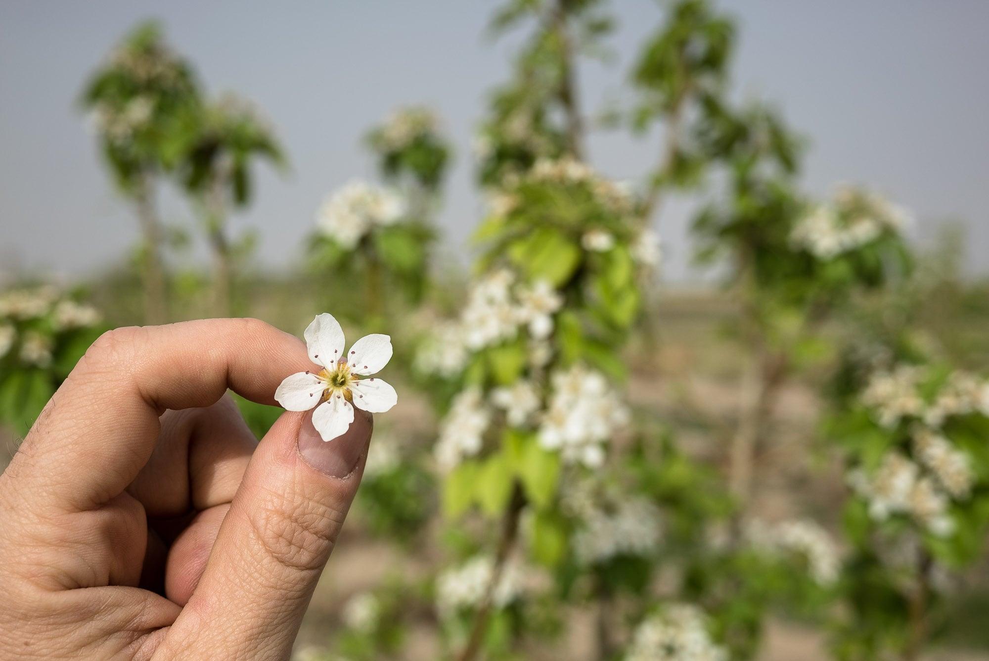 flowers near Khan Saadat