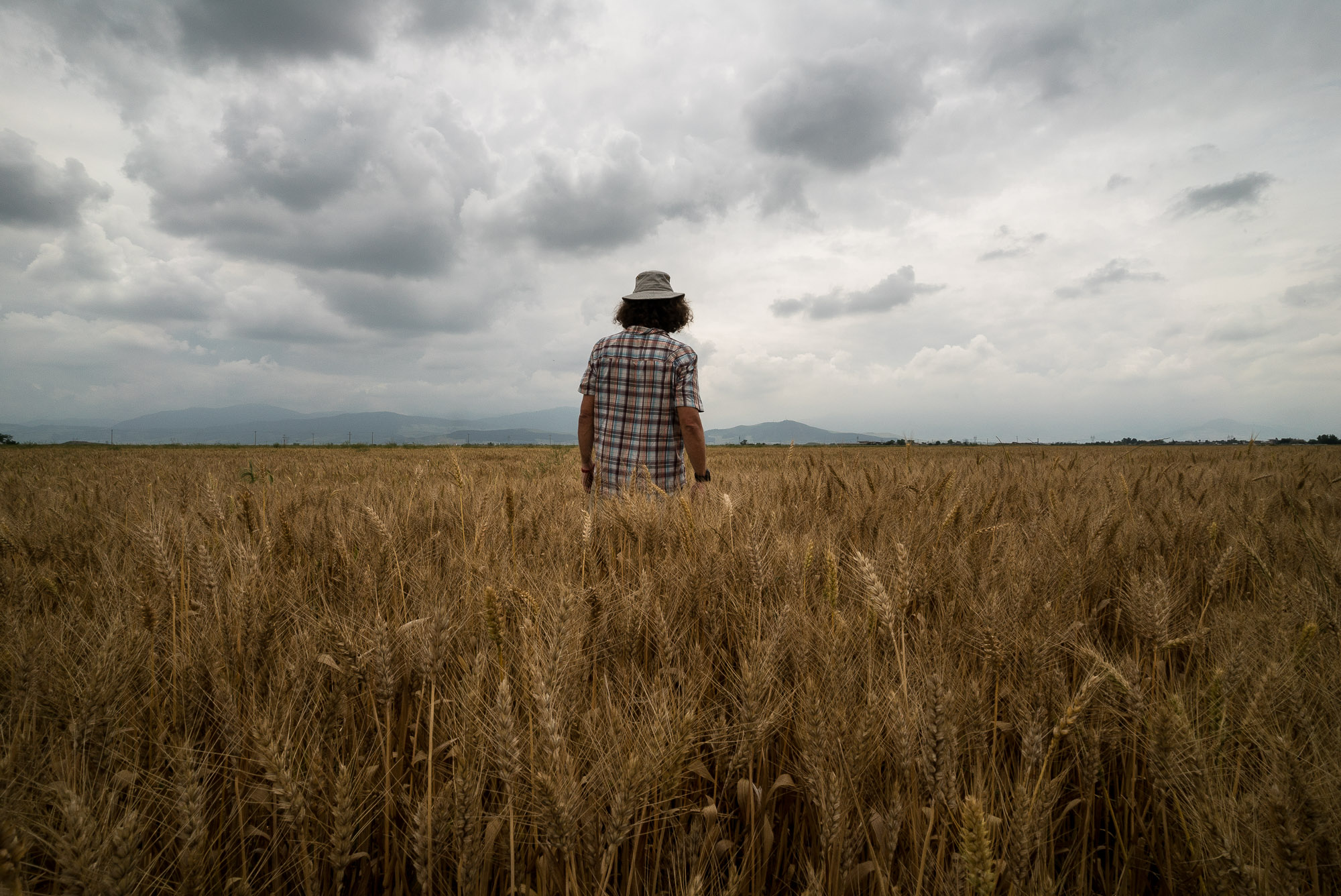 in a wheat field