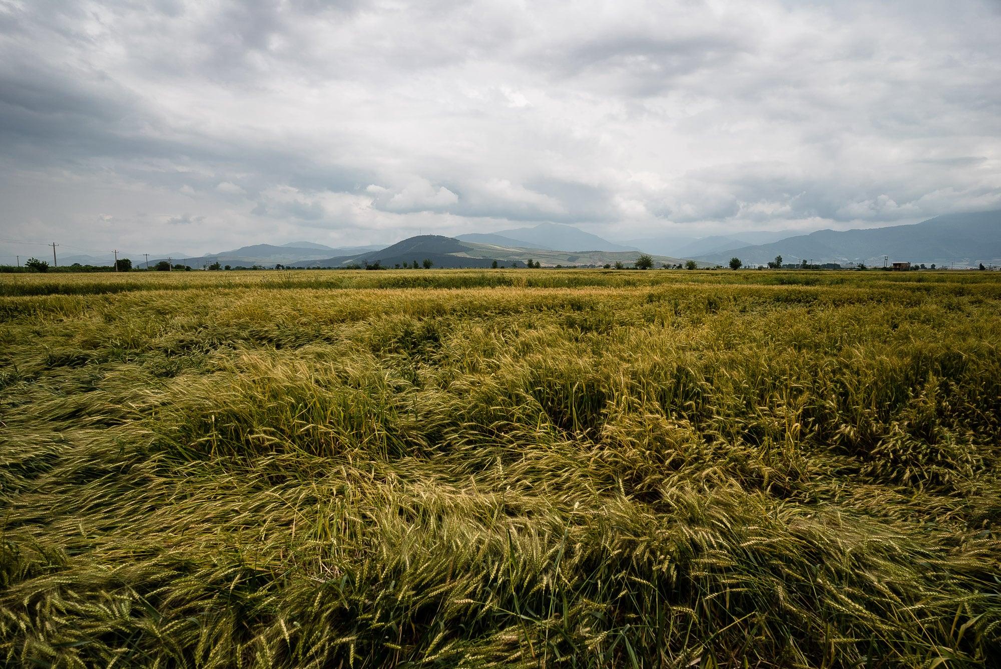 beaten field