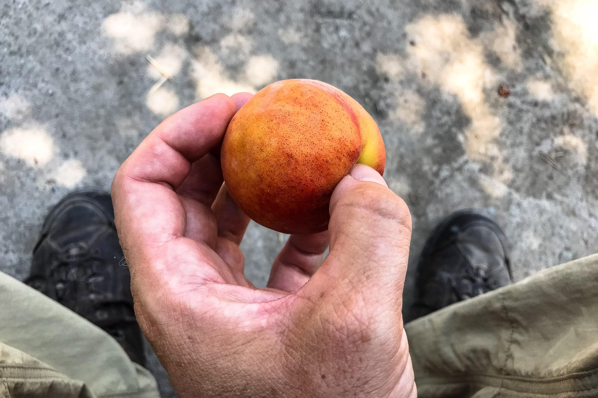 peach?