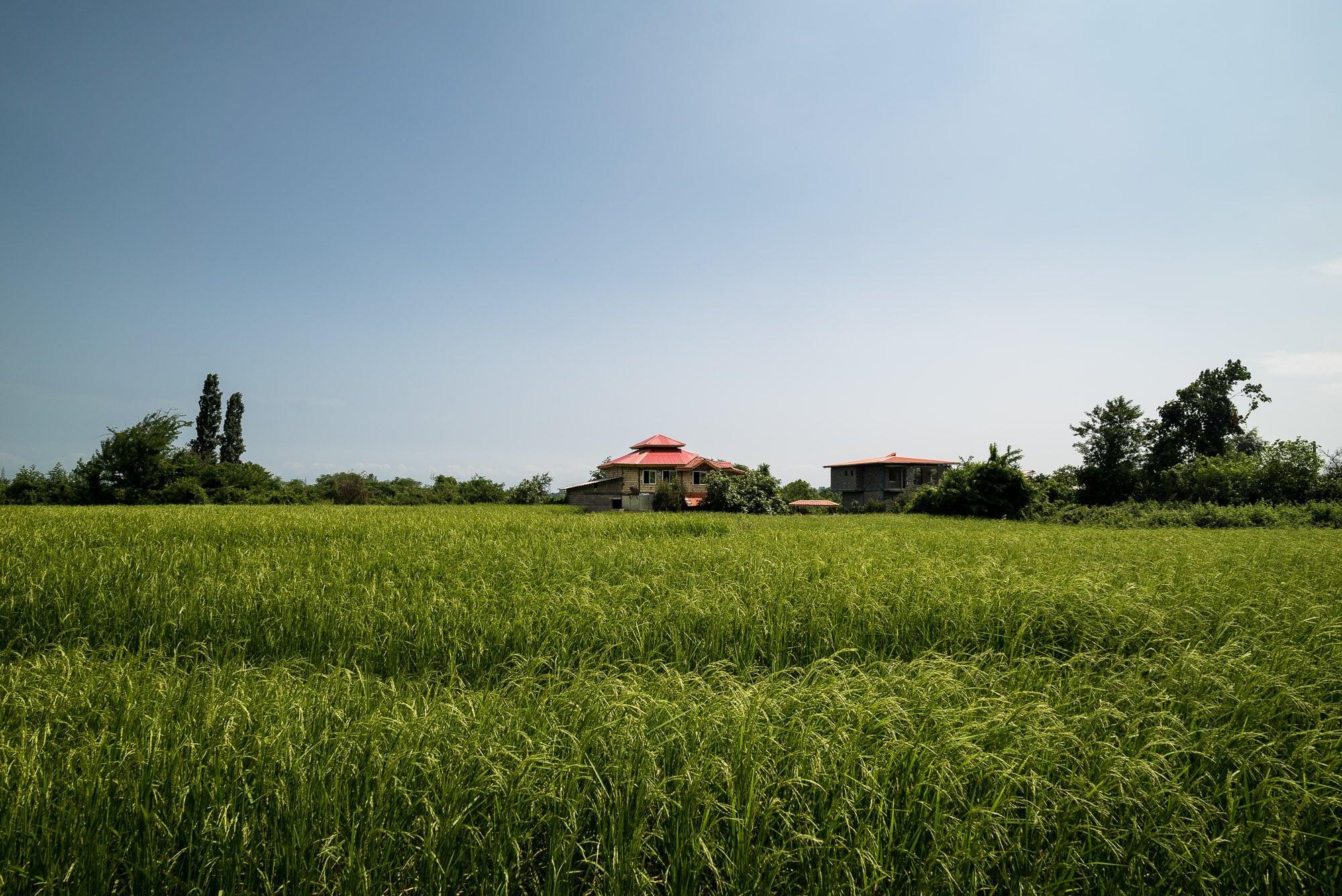 rice paddies and house