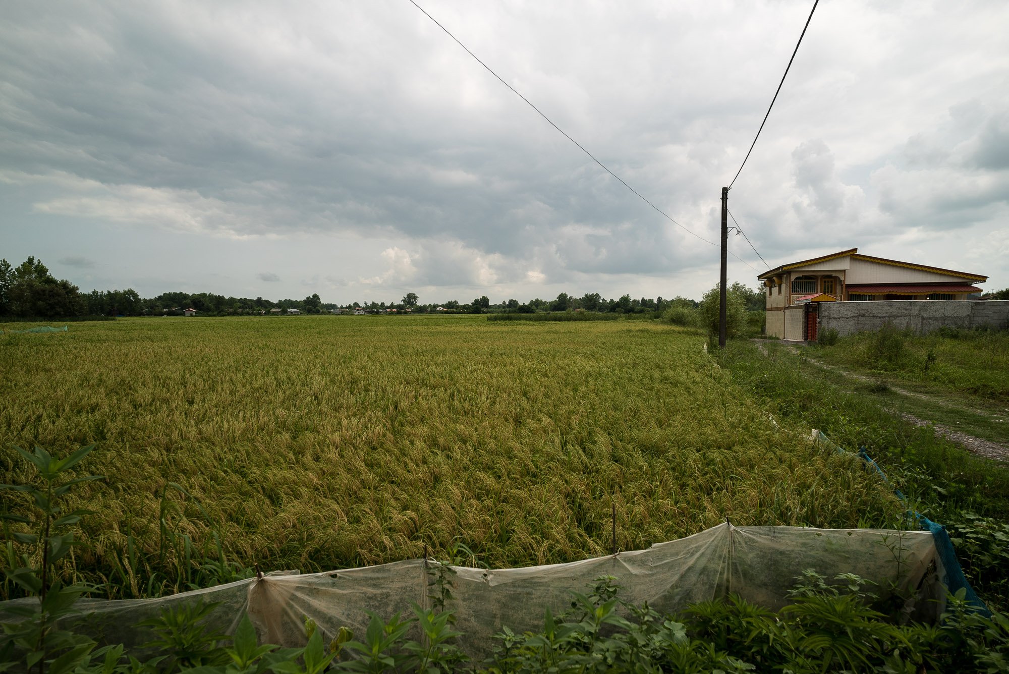 fields near Khomam
