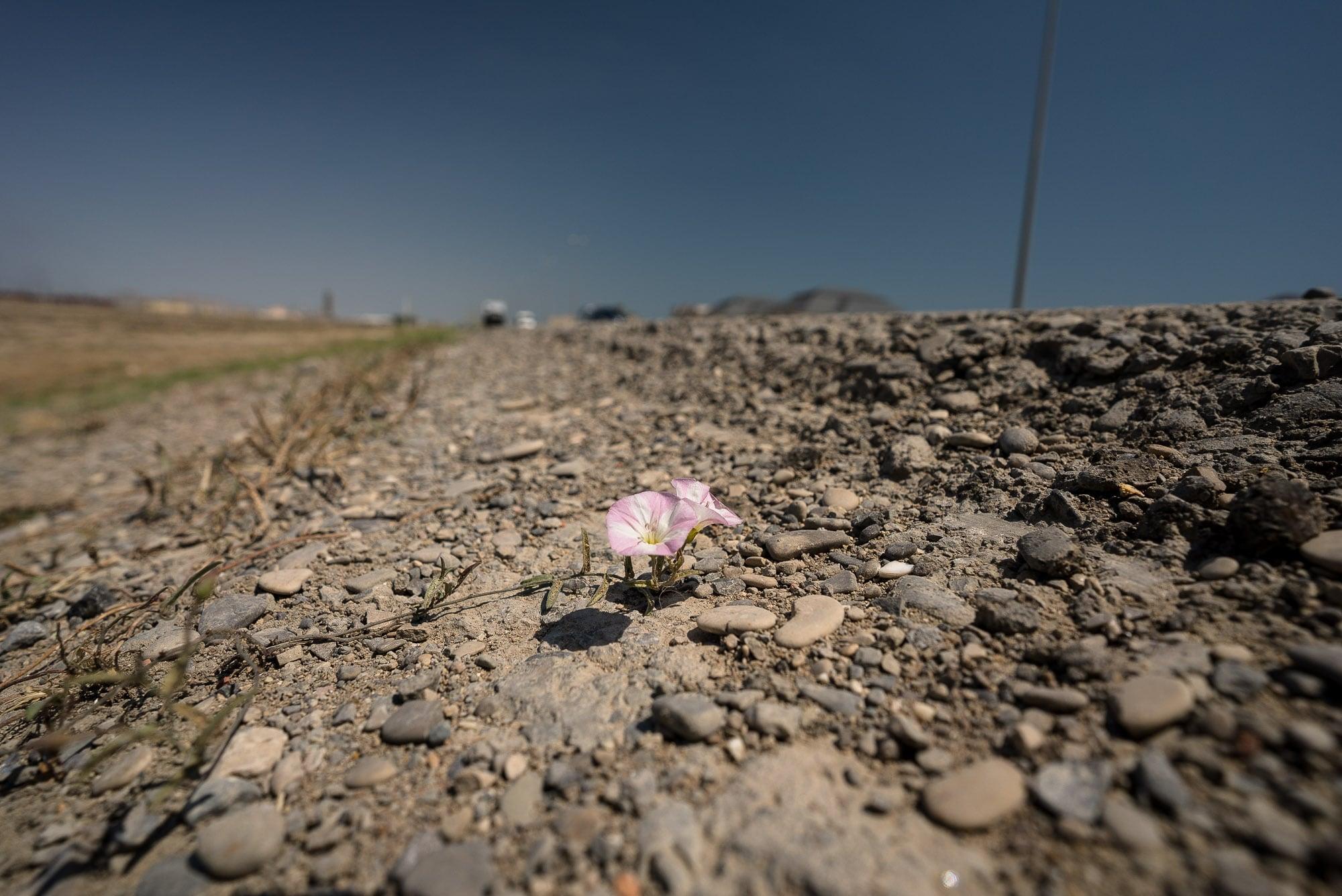 flower near the road