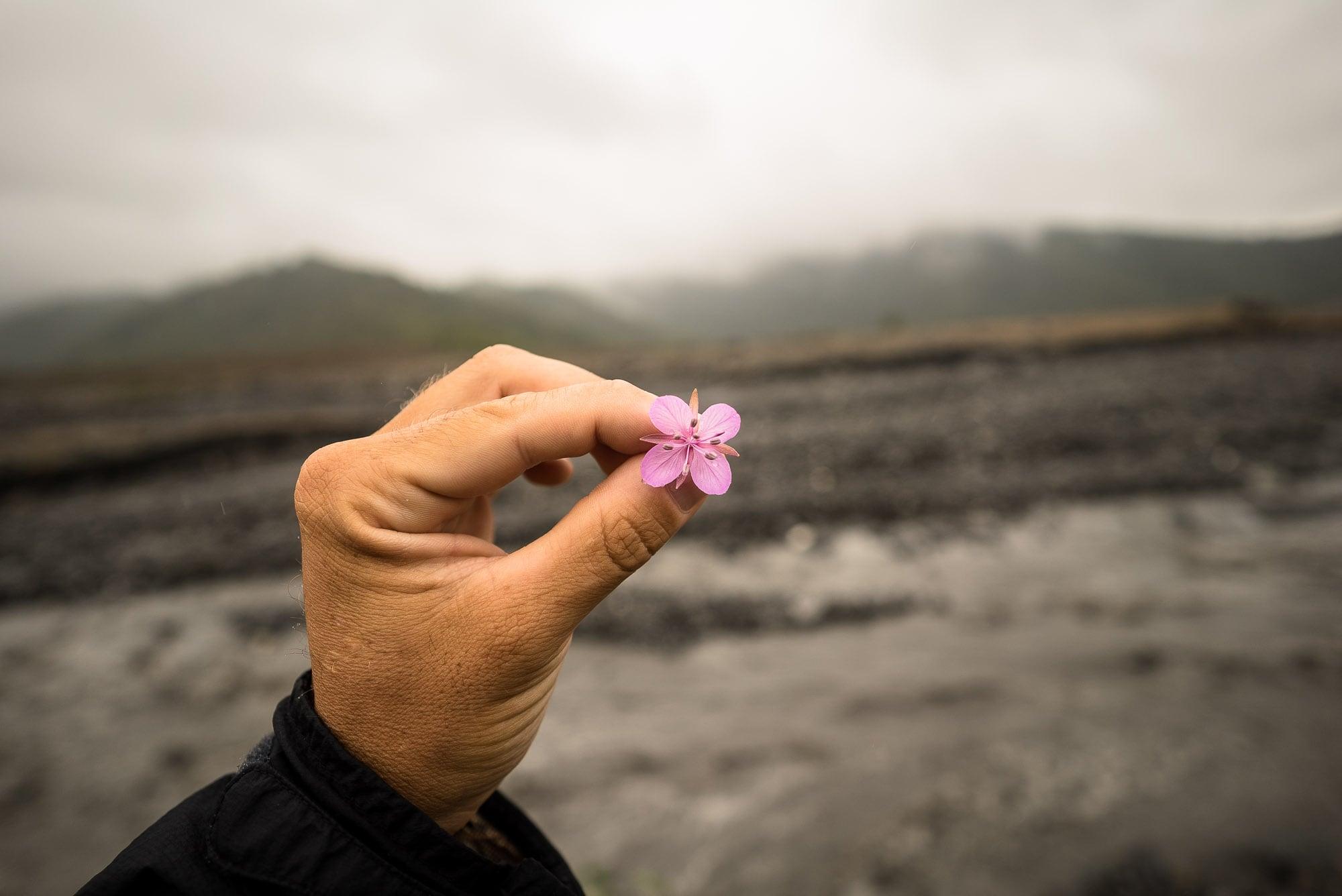 flower in Gabala