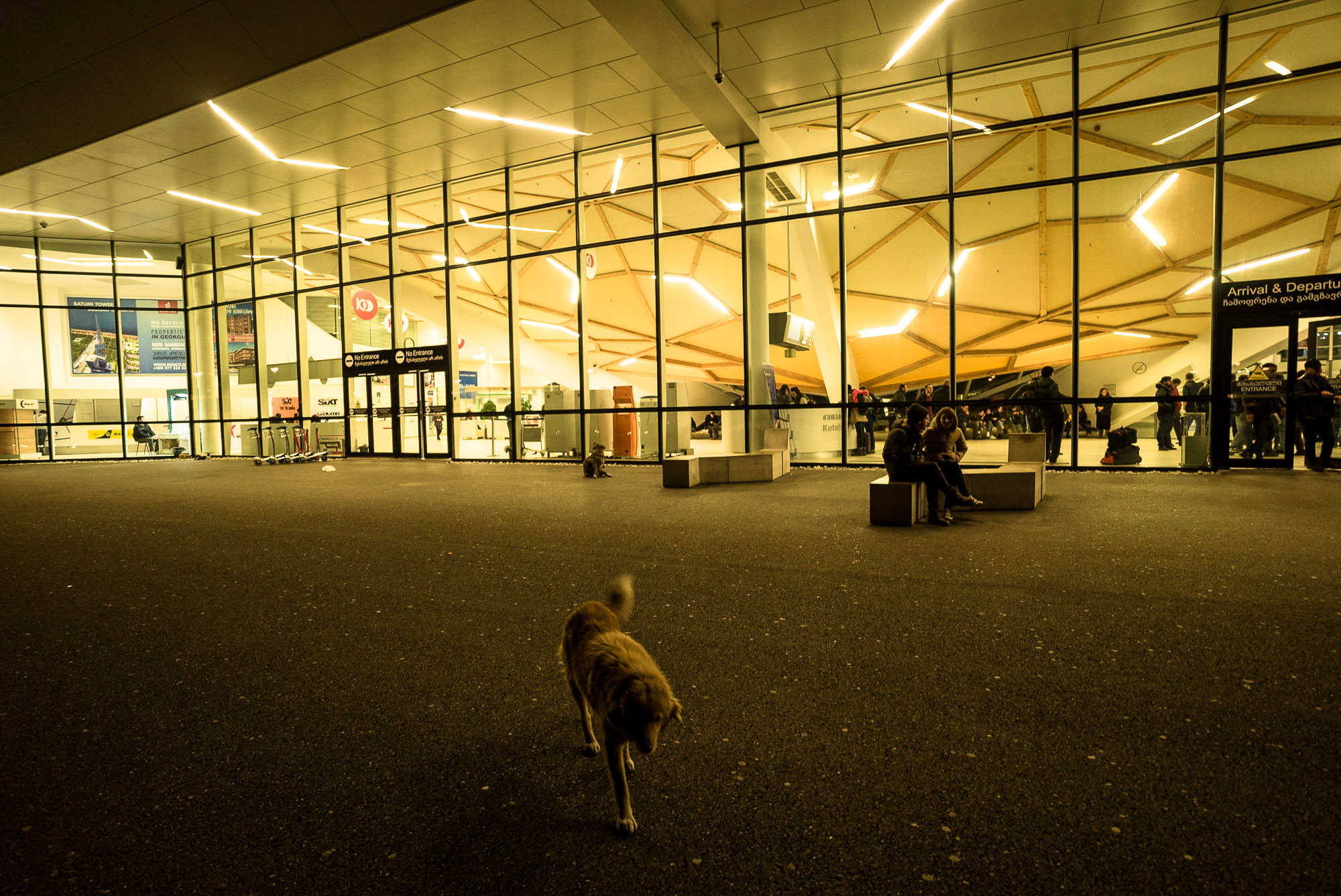 dog at Kutaisi airport