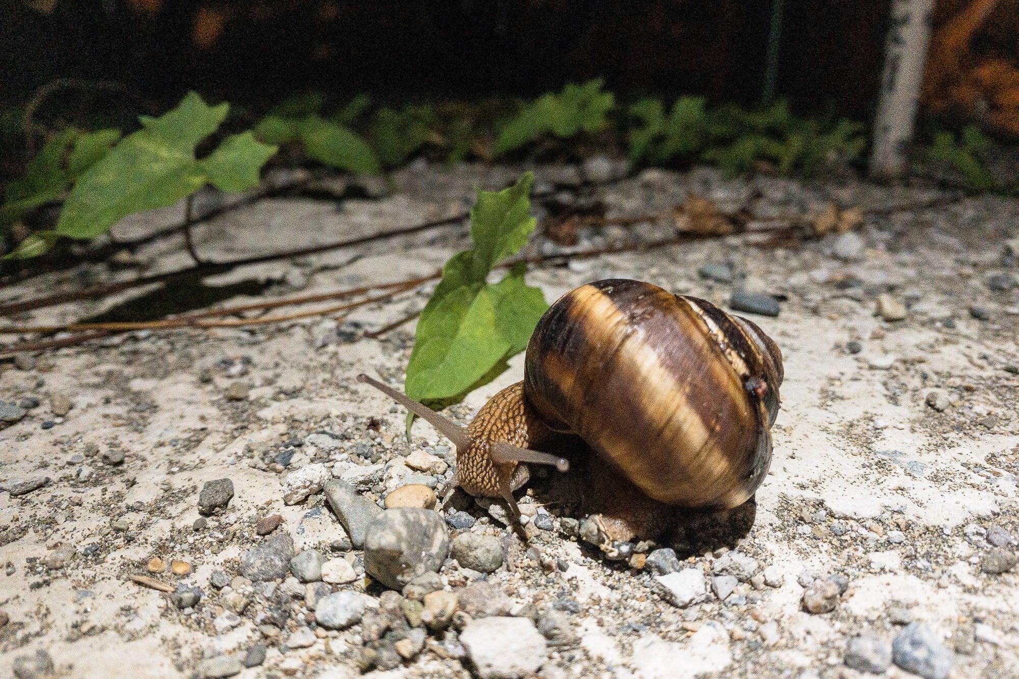 snailbro