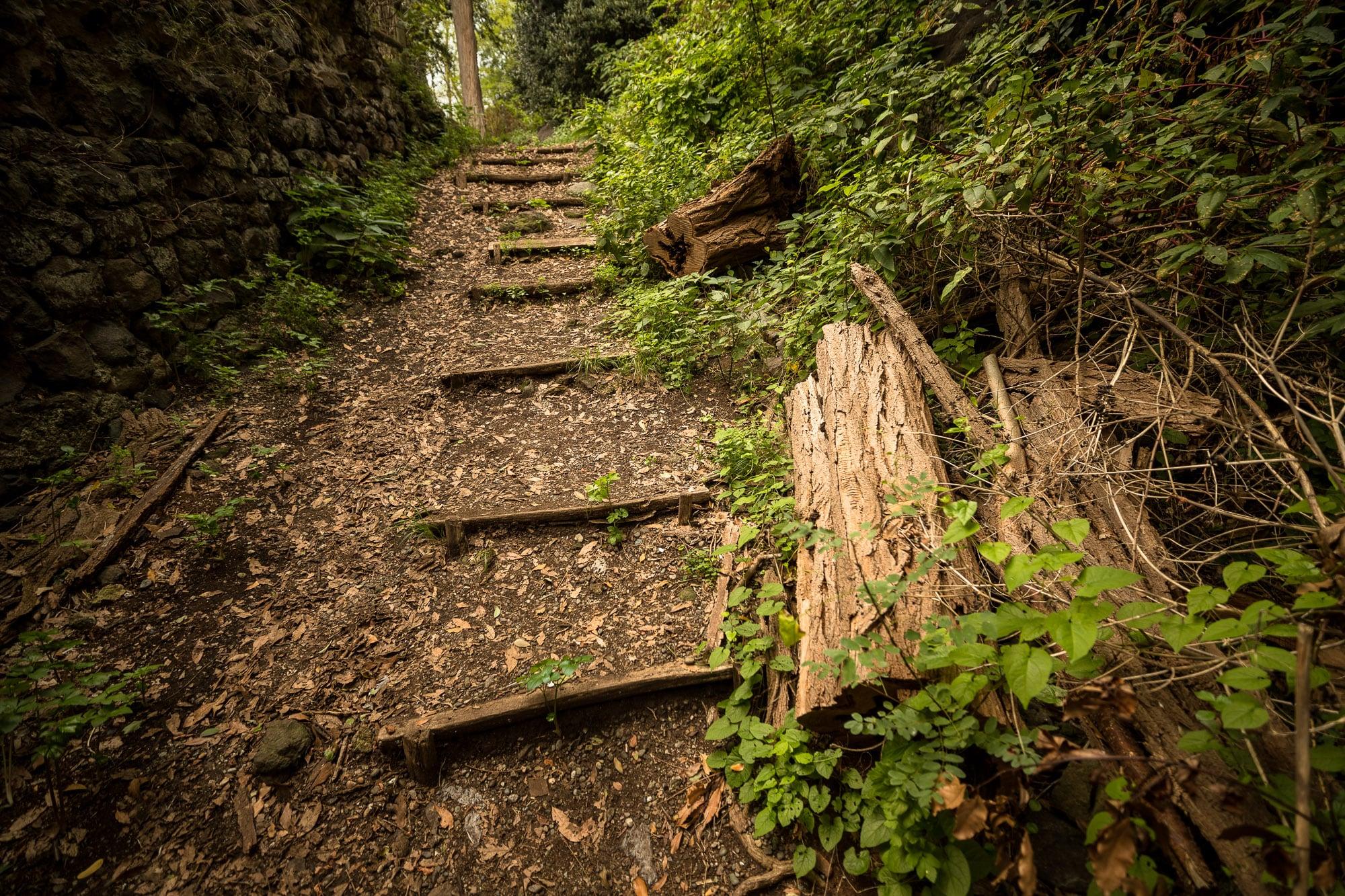 path on Giresun Island