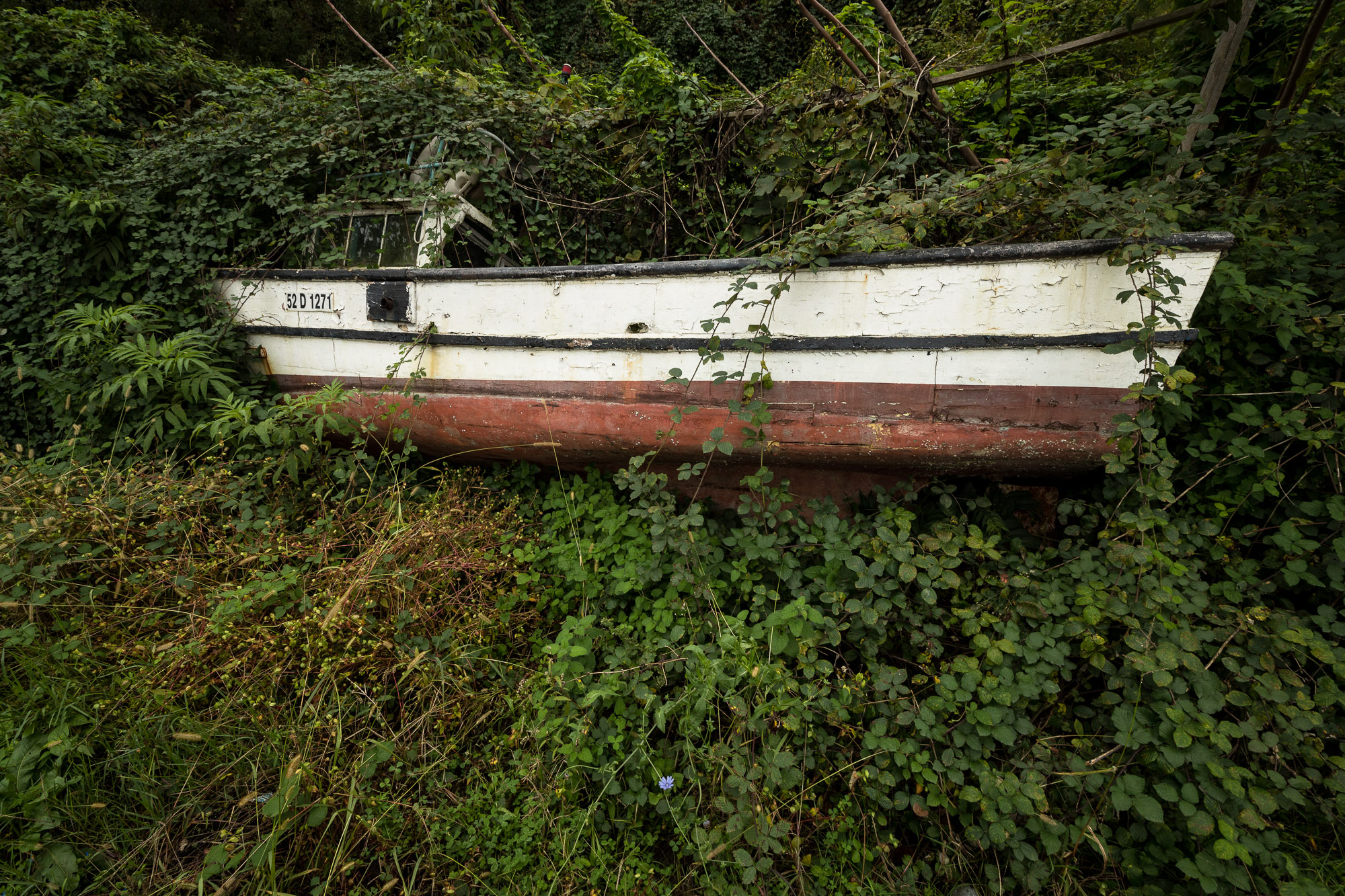 boat in plants