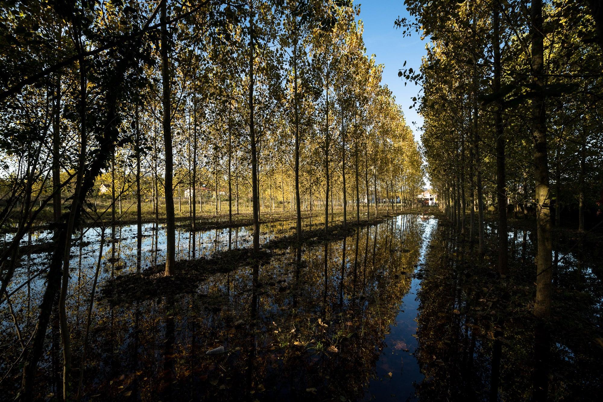 water around trees