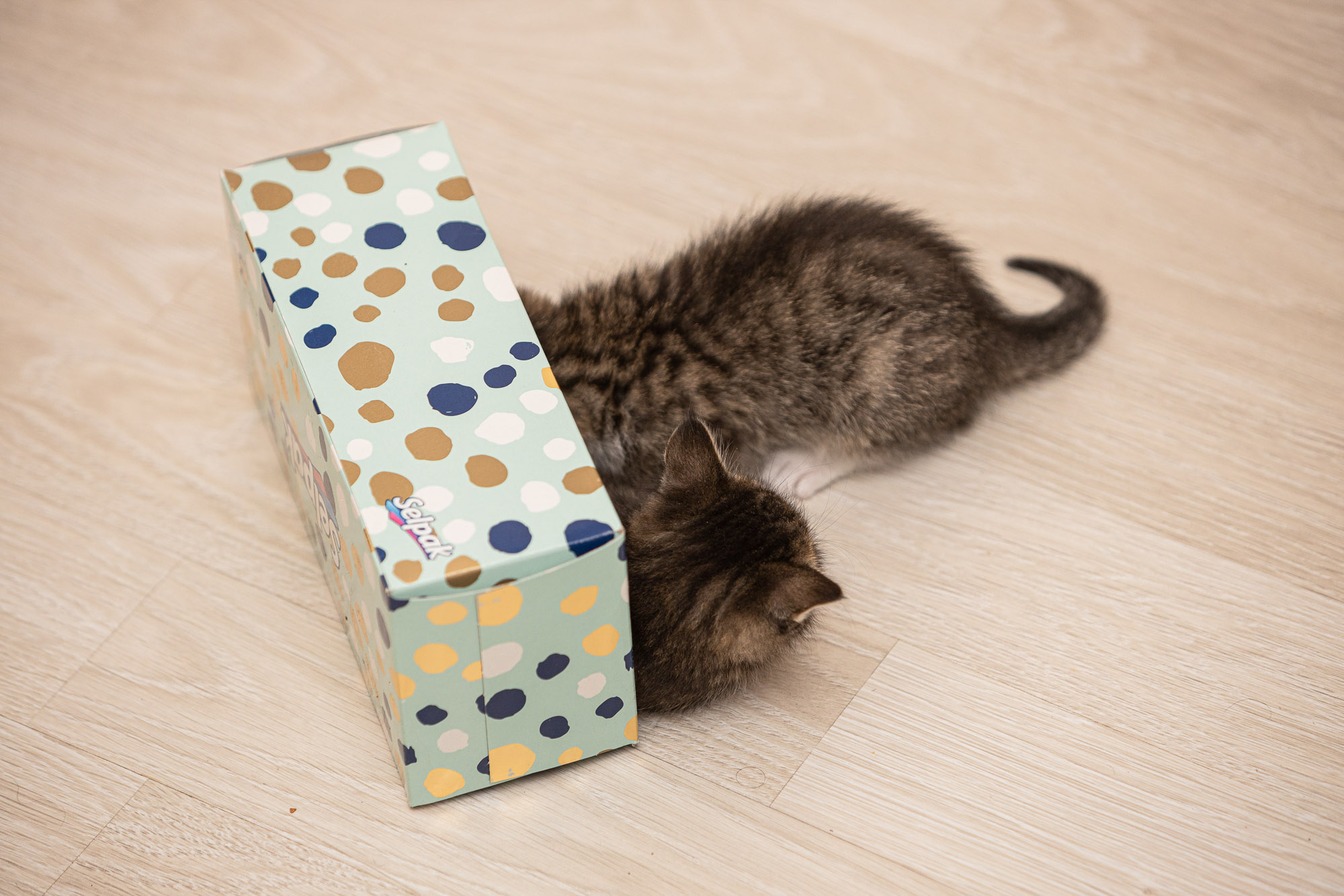 kittehs with tissue box
