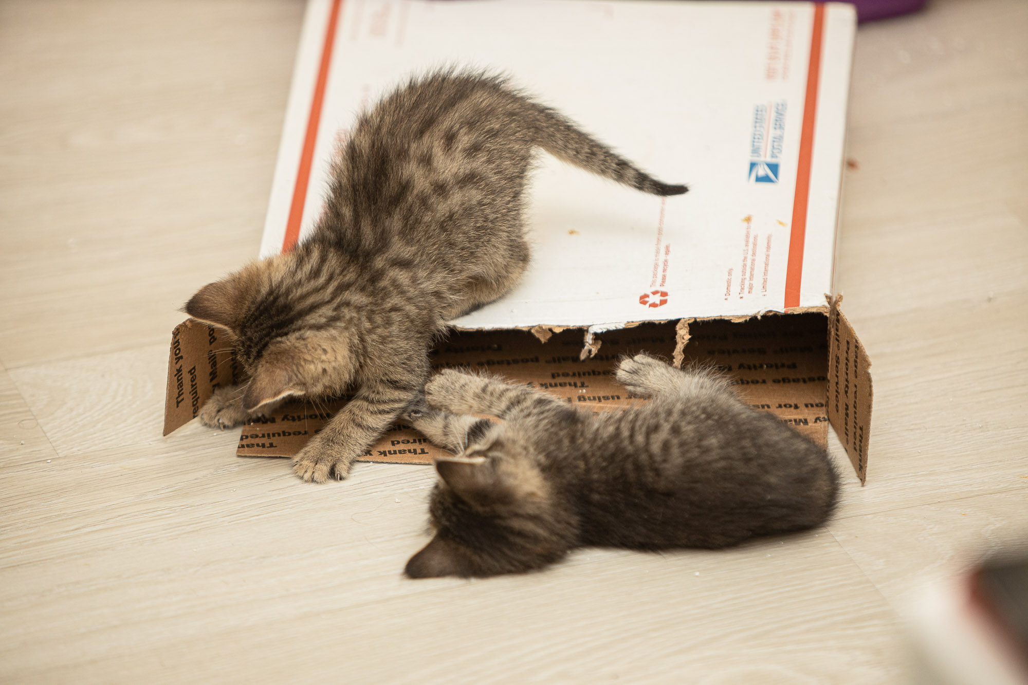 kittehs with cardboard box