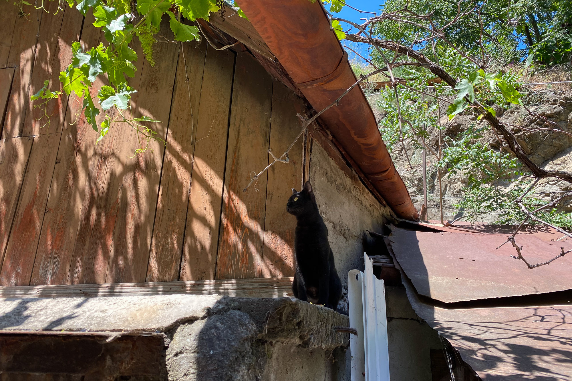cats on a roof