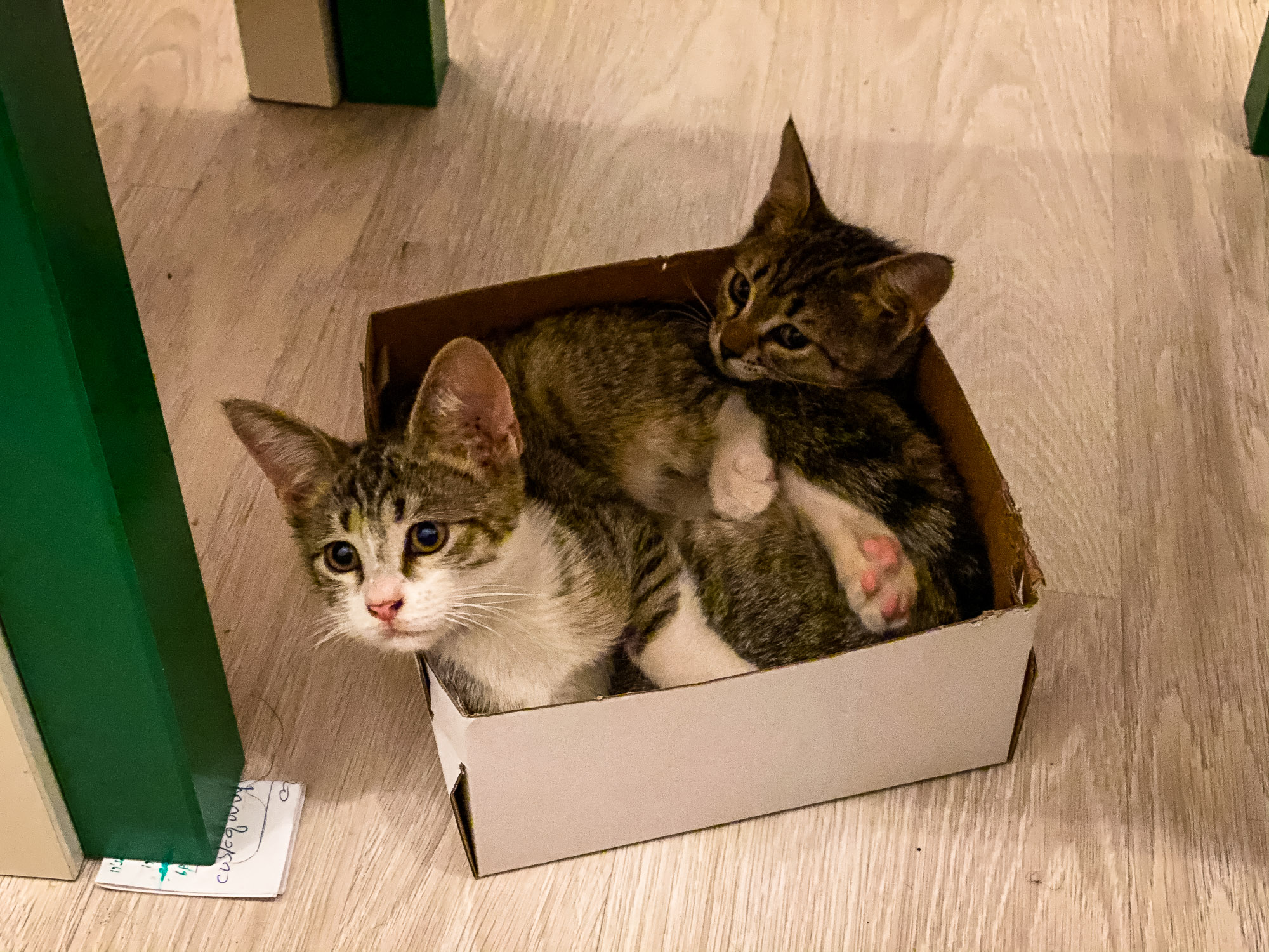 Coco and Toto in a box