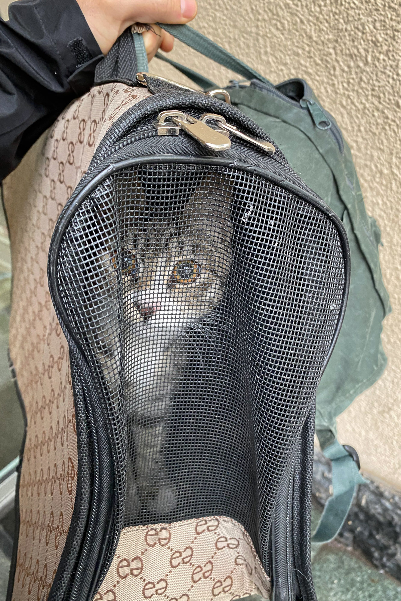 Misha, a cat from Tbilisi, does not like being arrested